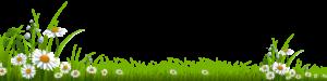 daisy-grass-amberry-1